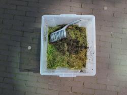 http://www.yukarimatsumoto.nl/files/gimgs/th-58_Boxwithgreen.jpg