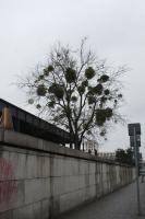 https://www.yukarimatsumoto.nl:443/files/gimgs/th-35_Berlin_mistletoe_s.jpg