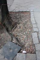 https://www.yukarimatsumoto.nl:443/files/gimgs/th-35_Berlin_streetree_s.jpg
