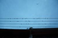 https://www.yukarimatsumoto.nl:443/files/gimgs/th-35_China-birds-sky.jpg