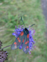 https://www.yukarimatsumoto.nl:443/files/gimgs/th-35_Ireland-Butterfly.jpg