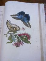 https://www.yukarimatsumoto.nl:443/files/gimgs/th-35_Natural-library02.jpg