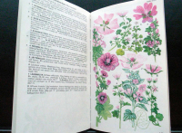 https://www.yukarimatsumoto.nl:443/files/gimgs/th-35_Swedish-botanical.jpg